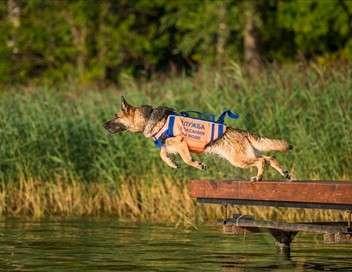 Des chiens extraordinaires