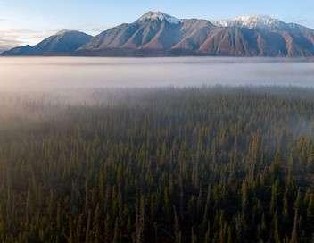Les forêts du Grand Nord