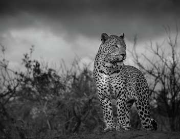 Afrique du Sud : la piste du léopard