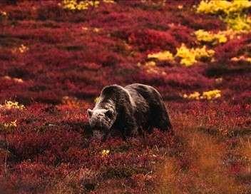 Kamtchatka, la chevauchée sauvage