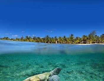 Les tortues de mer de Lamu