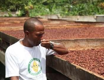 Équateur, l'autre pays du chocolat