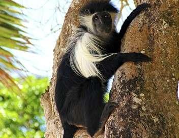 Afrique : les trésors cachés de la nature L'  île aux singes