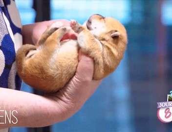 Bienvenue au monde Bébés chiens : les 100 premiers jours de leur vie