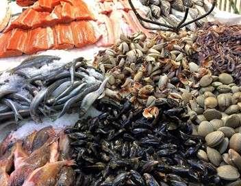 Le saumon, un bon filon