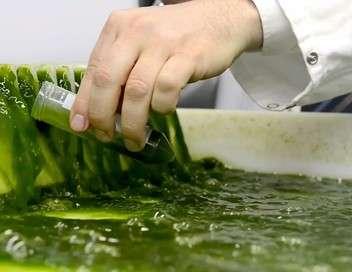 Les algues, des pouvoirs insoupçonnés