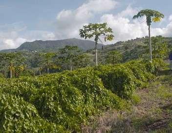 Six îles du vent Martinique et Dominique, des édens secrets