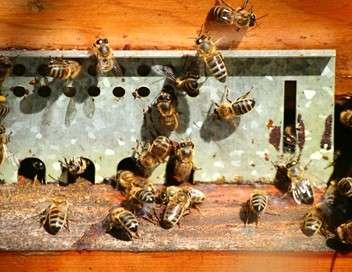Xenius Les abeilles