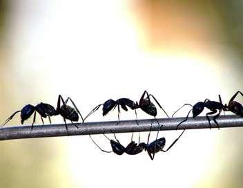 La planète des fourmis Anatomie d'une colonie