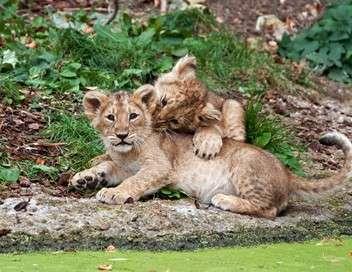 Le royaume des lions