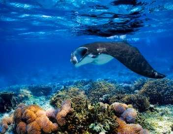 Secret Seychelles : d'Arros