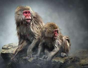 Tendresses animales Une vie de singe