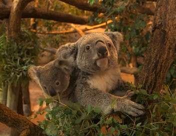 Zoo de Beauval : dans les coulisses du plus grand zoo de France