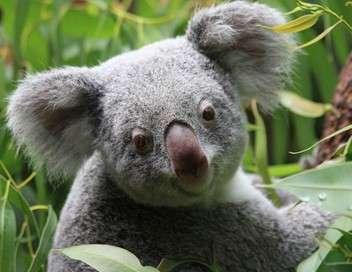 Crocodiles, koalas et rhinocéros : naissances incroyables au zoo !