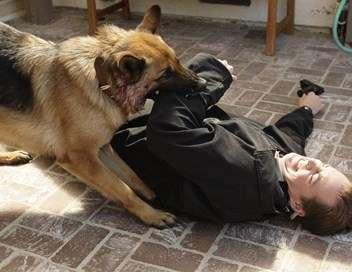 NCIS Le meilleur ami de l'homme