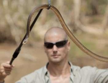 Taïpan, le serpent le plus venimeux au monde
