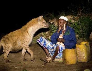 Les hyènes de Harar
