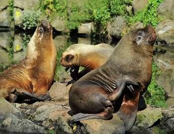 Promo zoo vincennes
