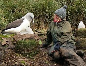 Bird Island, le paradis des oiseaux dans l'Antarctique