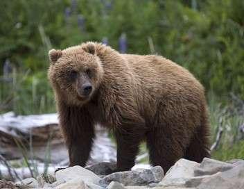 Alaska, la frontière sauvage