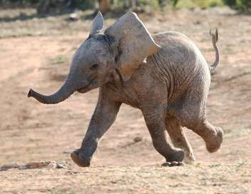 La famille éléphant & moi