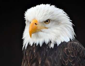 Freedom, la légende des aigles