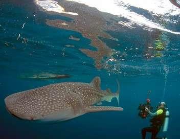 À +/- 5 mètres de la surface des océans