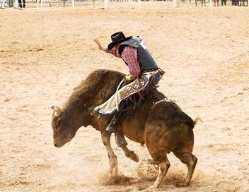 Rodeo Pro Bull Riding