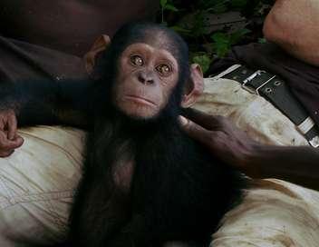 La fabuleuse histoire du singe Canelle