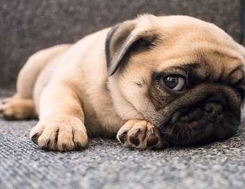 Too Cute (Trop mignon)