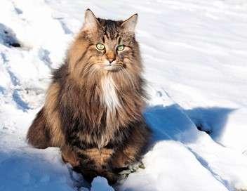 Le zapping le plus chat