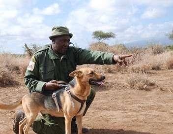 Kenya, les chiens au secours des éléphants