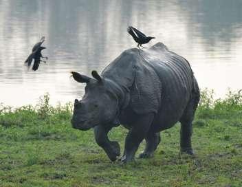 Les grands animaux d'Asie