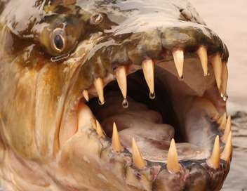 River Monsters, le best of