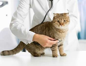Super vétérinaire