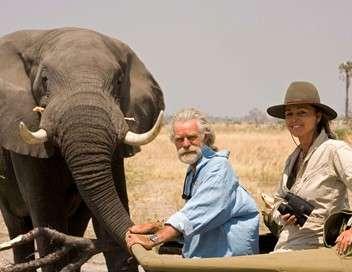L'âme des éléphants