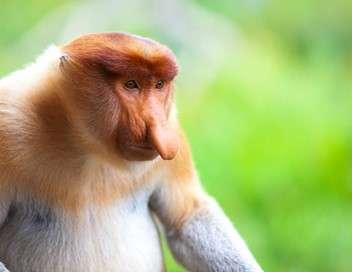 S.O.S. Animaux en danger Destins de singes