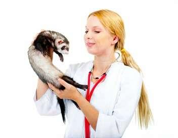 Profession vétérinaire