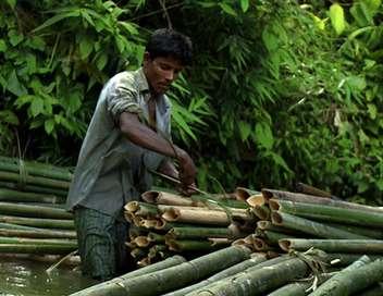 Le périple du bois pauvre