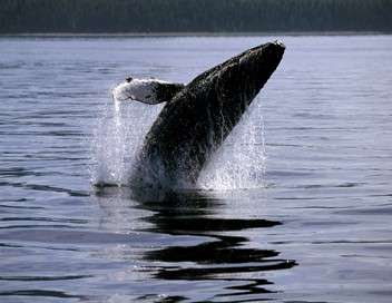 L'île aux baleines du docteur Poole