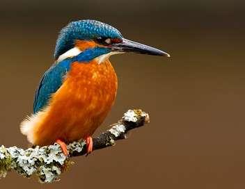 La quotidienne Oiseaux, insectes... vers une extinction biologique de masse ?