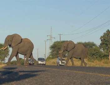 Botswana, la route de l'Éden