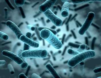 Bactéries résistantes, la guerre est déclarée