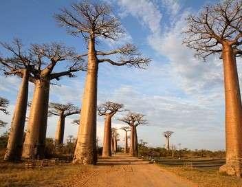 Madagascar, les trésors de l'île Rouge