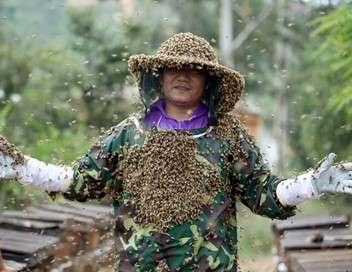 Chine, les ruches de maître Xing