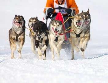 Iditarod, la dernière course de Nicolas Vanier