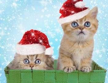Le grand bêtiser de Noël
