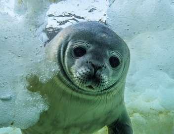 Les secrets des animaux des glaces