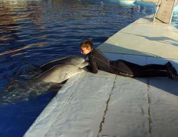 Thalassa Dauphins, le grand spectacle !