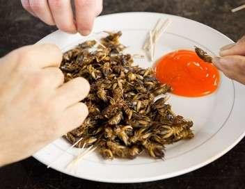 Les insectes, nourriture de demain ?
